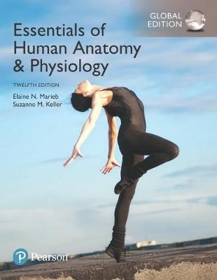 Essentials of Human Anatomy & Physiology, Global Edition (12th Edition)
